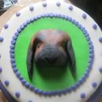 3d konijn met taart site